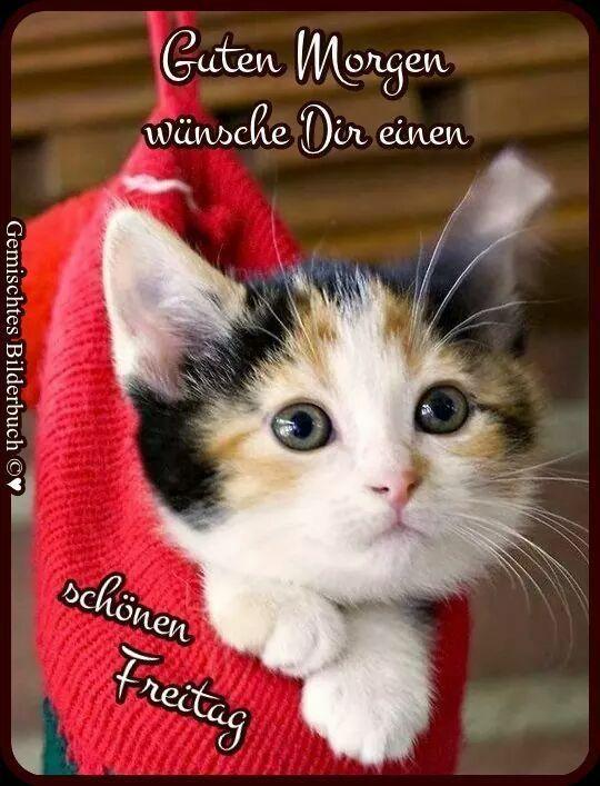 Untitled Freitag Katze Guten Morgen Freitag Und