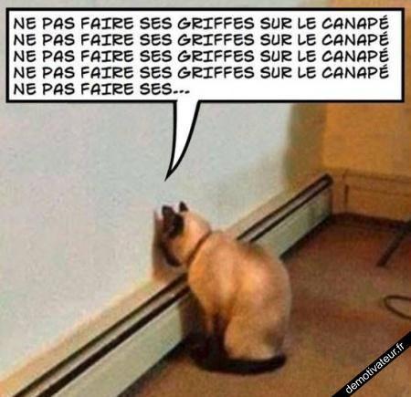 Demotivateur - Images: