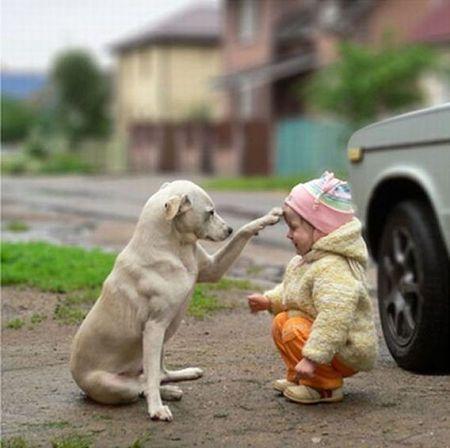 額に前足をやる犬と赤ちゃん
