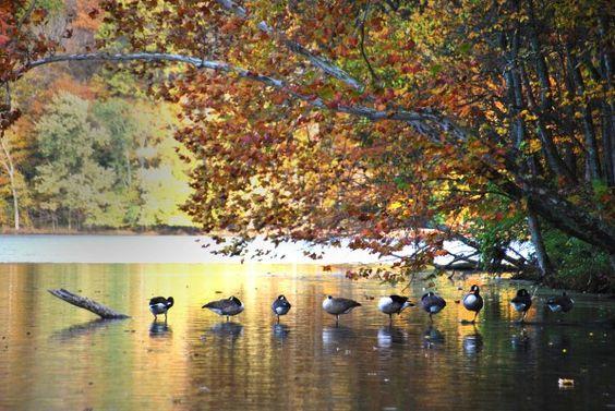 Radner Lake- Sarah Barksdale Photography