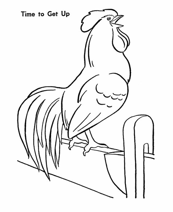 Farm animal chicken coloring page | Morning Rooster crows