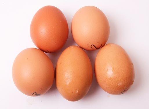 new york green market egg taste test molly-s-little-helpers