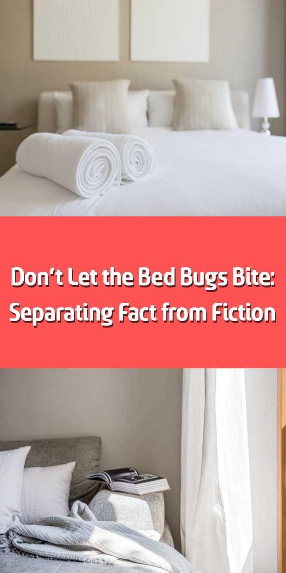 Don T Let The Bed Bugs Bite Separating Fact From Fiction In 2020 Bed Bug Bites Avoid Bed Bugs Bed Bugs Treatment
