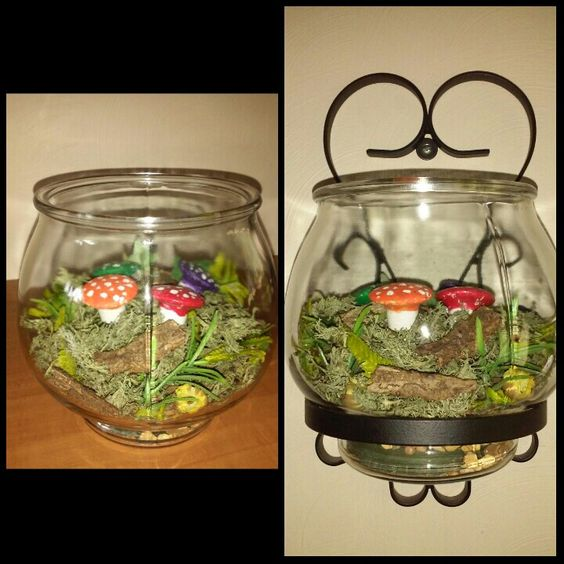 Mushroom garden in a fish bowl hanging on the wall