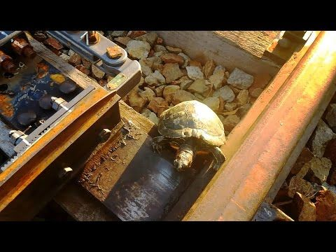 In Japan, custom trenches help turtles cross railroad tracks with ease | MNN - Mother Nature Network