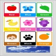 Basic Colours Digitally Printed Photo Roller Blind
