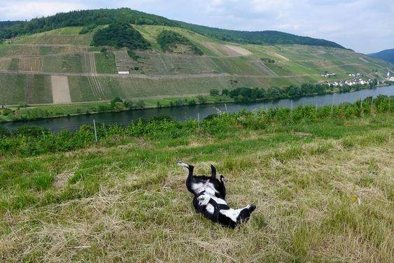 Weinbauorte und Burgen – weitere Ausflüge mit Hund an der Mosel