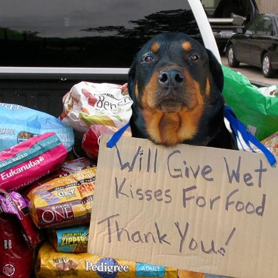 Pallets Of Pet Food For American Shelters Pinned Feb 1 2019