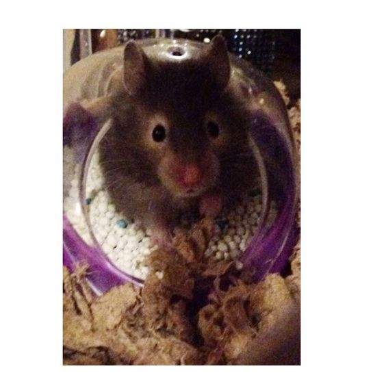 Hamster 💕