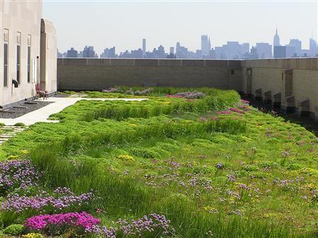 Green Roof Blog