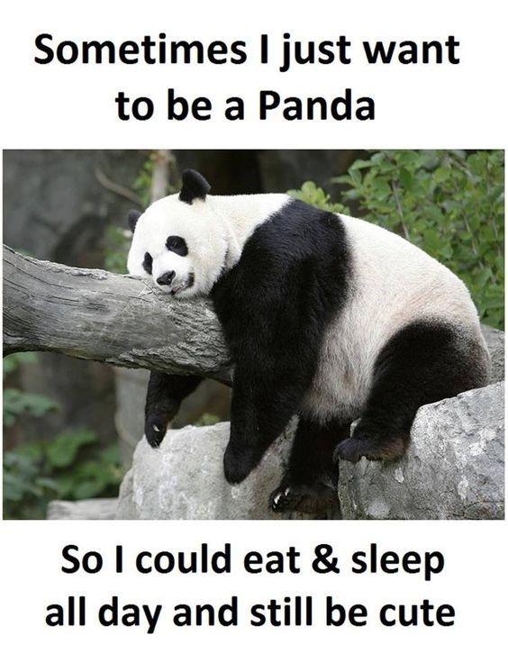 15 Incredibly Funny Panda Memes Funny Panda Pictures Panda Funny Panda Meme