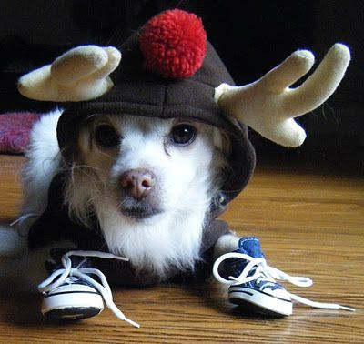 Soggy Train Dog Animals Dogsinties Dogsaccessoriestravel Dog