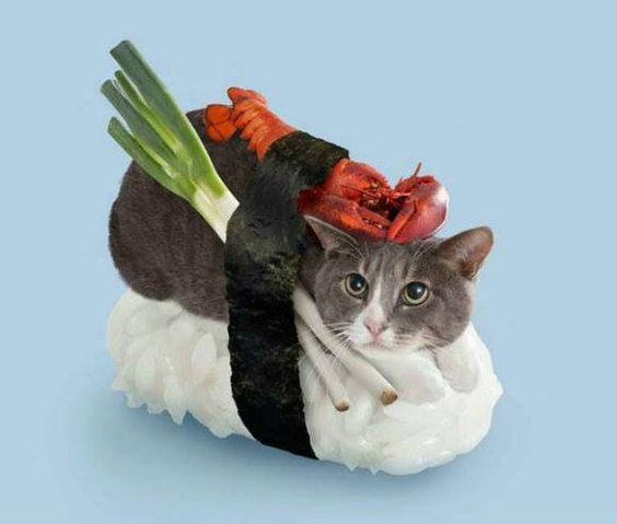 Cat Sushi (from Facebook, this can only happen in Japan)