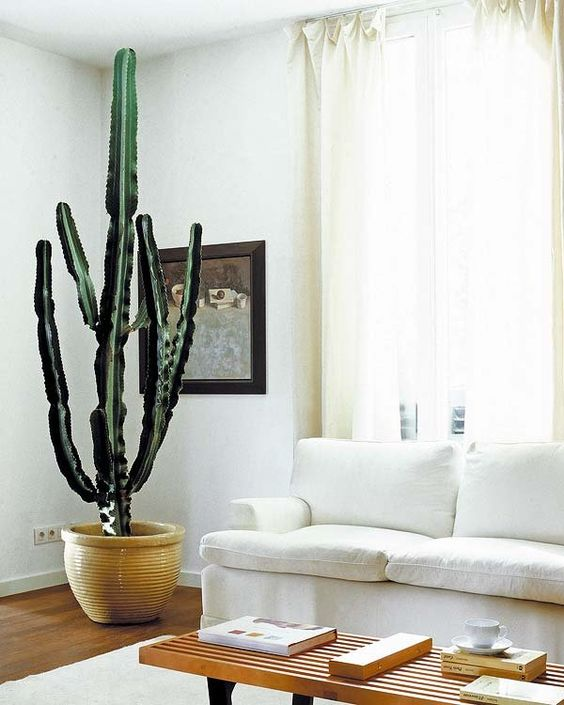 Ideas para decorar con plantas de interior interiores y for Ideas para decorar interiores