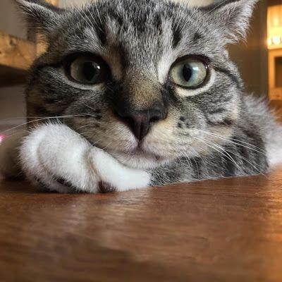 """If your kitty is bored, they may groom constantly, with long, intense strokes. Their tail might be low, at """"half-mast,"""" or swishing slowly back and forth, telling you, """"I'm not happy."""""""