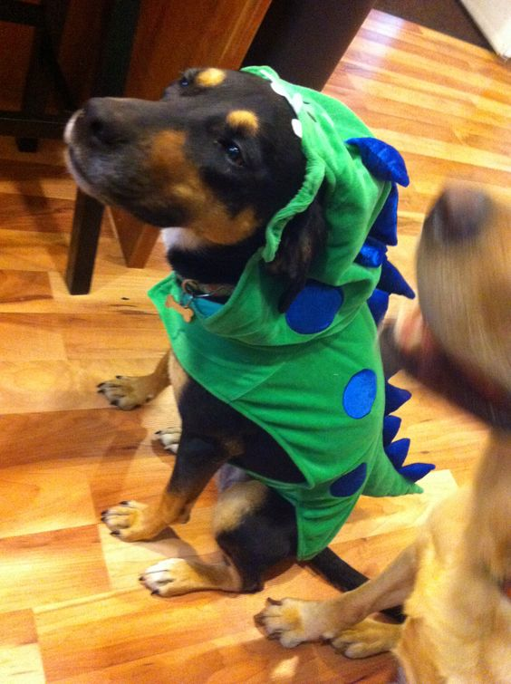 Dog or dragon or dinosaur??!! Either way she's cute!