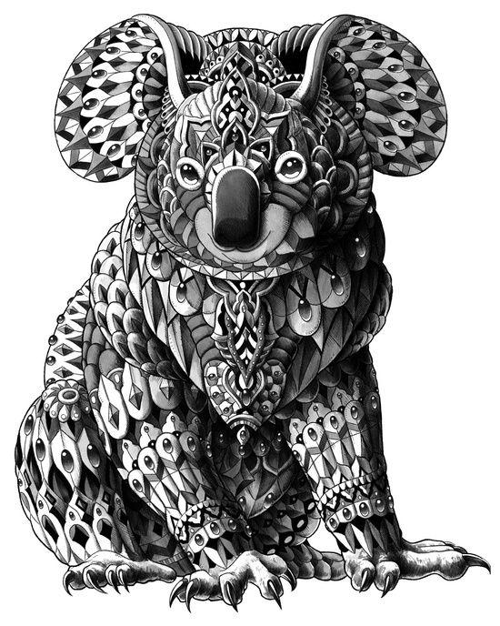 Koala Art And Design : Koala art print skizzierung kunstwerke und plakat