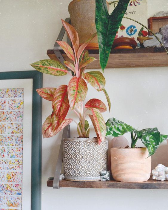 An underrated plant, in my opinion, is the Aglaonema. It's proven to be easy since day 1 and I just recently got my second Aglaonema the…