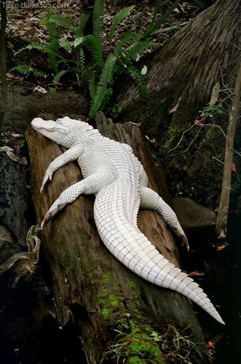 Atemberaubende Seltene Albinotiere Albino Animals Rare Albino Animals Nature Animals