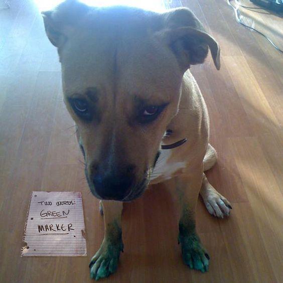 Pet shaming.....green marker!  hehehehe