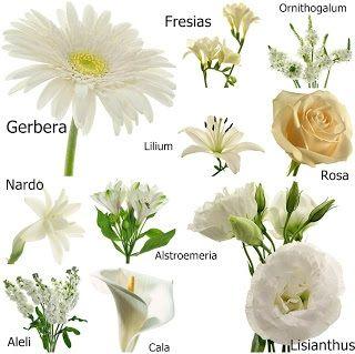 Tipo de flores para arreglos tipos de flores pinterest for Catalogo de flores de jardin
