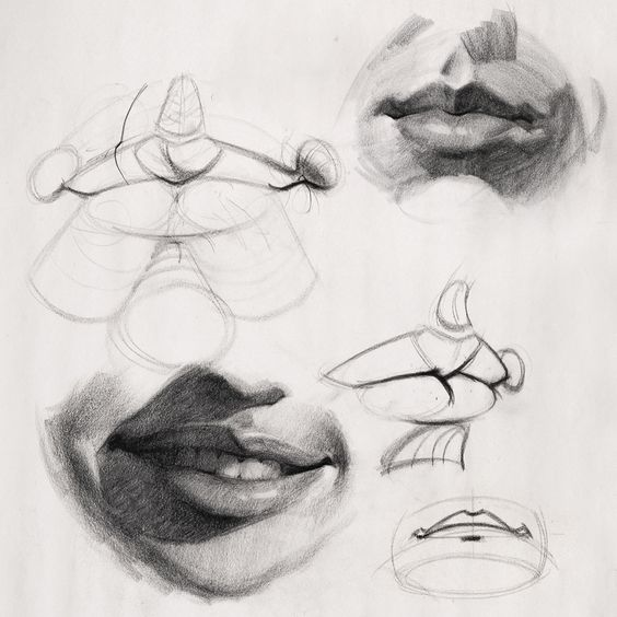 How To Draw Lips Anatomy And Structure Lips Drawing Anatomy Drawing Portrait Drawing