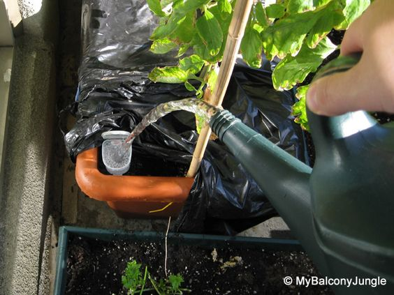 Watering the self watering container
