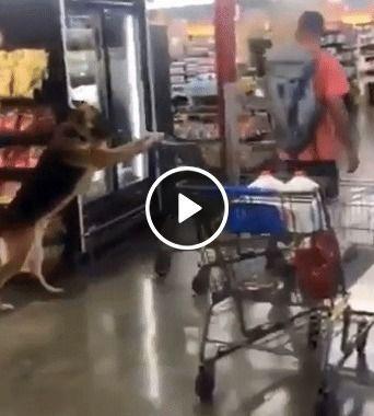 Essa cachorro ajuda a fazer as compras.