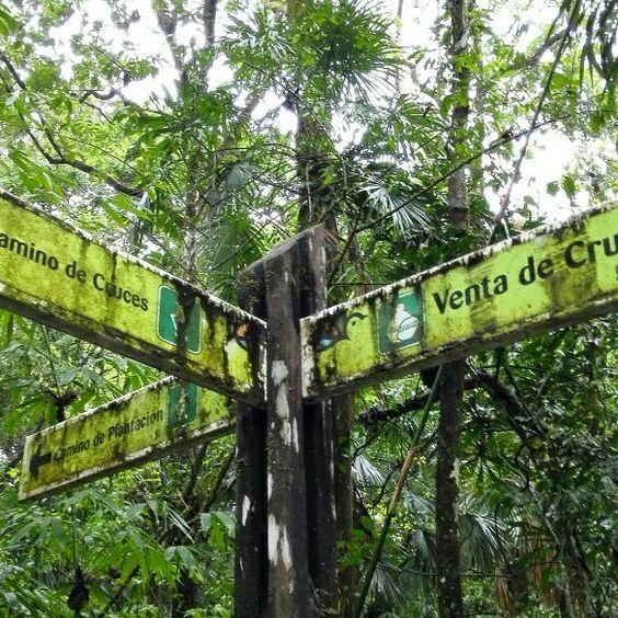 Cocoa Plantation Panamá