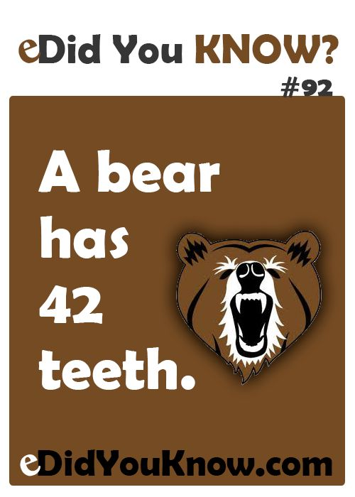 Did You Know 92 Dental Fun Facts Dental Fun Dental Facts
