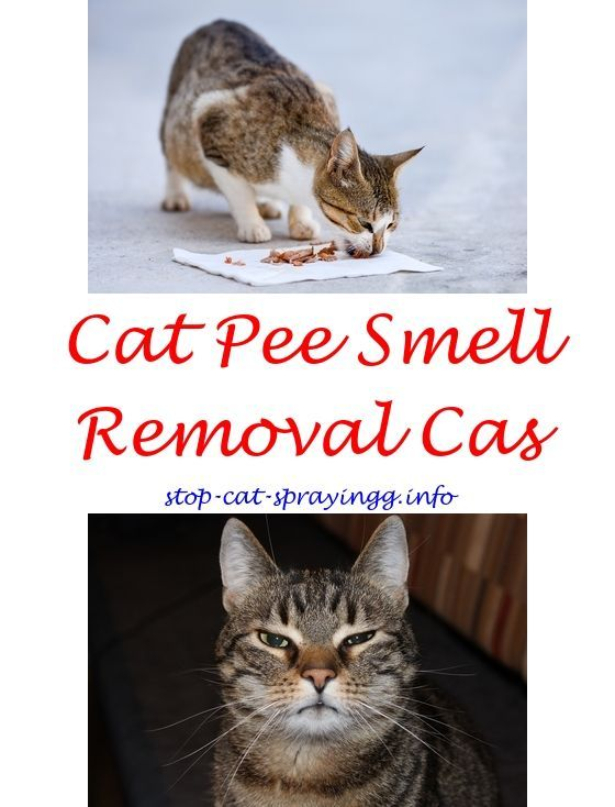 How To Get Rid Of Cat Spray Smell Under House