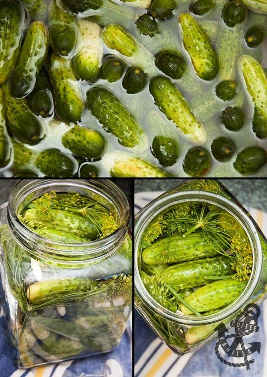Polish Salted Dill Cucumbers in Brine - Ogórki Małosolne #InheritanceRecipes