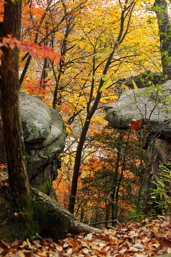☀Rocky woods at Signal Point, Signal Mountain ~ Rocky Woods by Virginia Bailey*