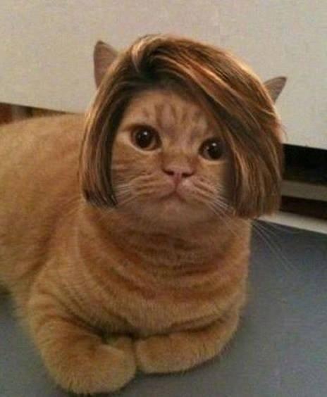 perros y gatos con pelucas Más