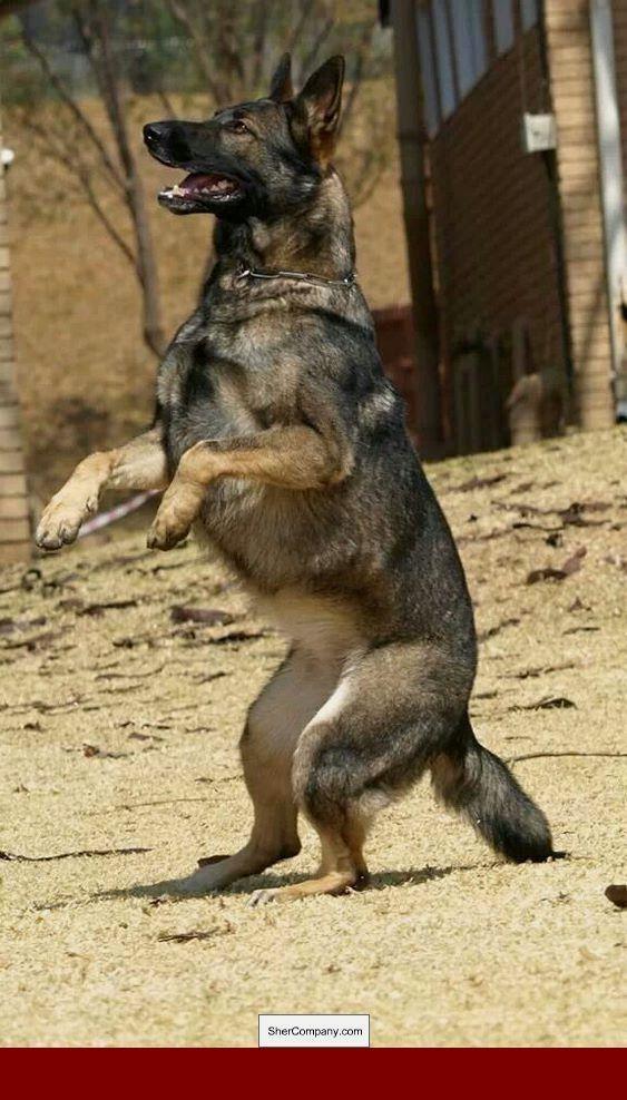 How To Train Your Dog To Eat Slower Dogtraining Dogtrainingideas