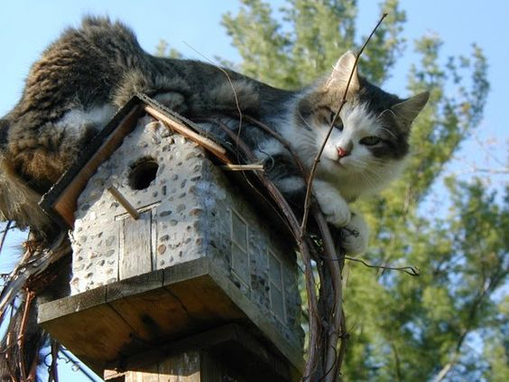 Tucker waiting for his bird friends