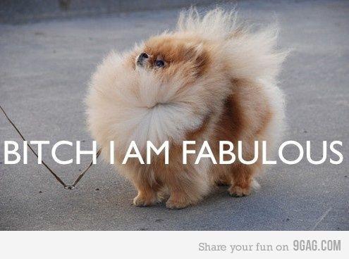 Bitch, I am Fabulous