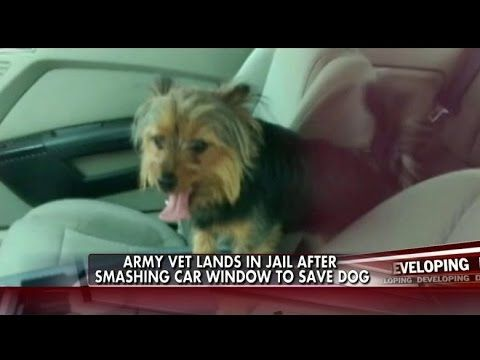 Veteran Saves Dog Trapped in Hot Car, Gets Arrested - Pet360 Pet Parenting Simplified