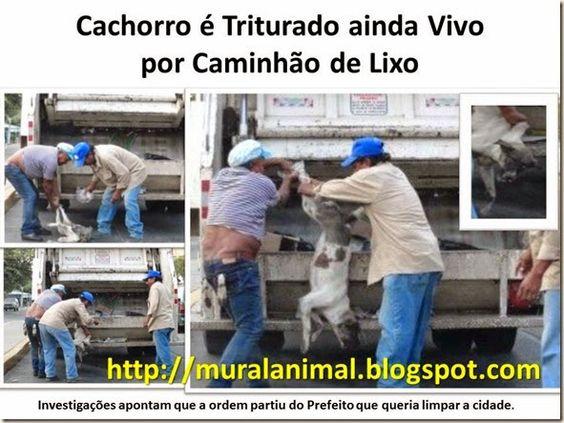 Mural Animal: Cachorro é Triturado ainda Vivo por Caminhão de Li...