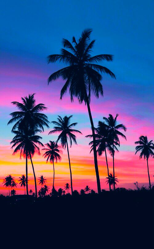 Colourful sunset amongst tall palm trees. Click here to shop beachwear by Matthew Williamson.