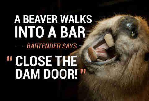 Scozzie Friday Funny Bar Jokes Corny Jokes Jokes