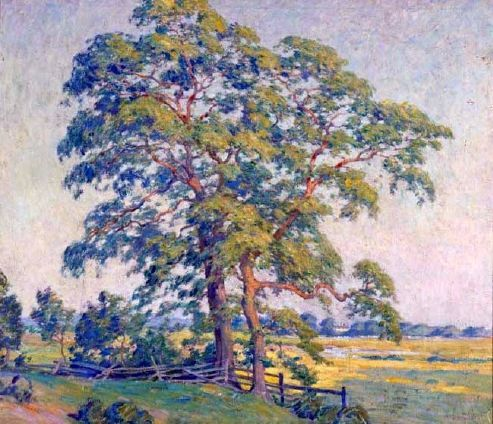 small_pepperidge-trees.jpg 493×424 pixels