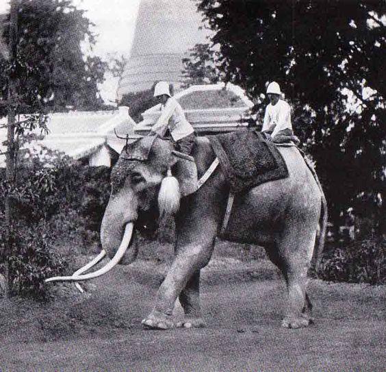 1898 éléphant royal au jardin Saranrom
