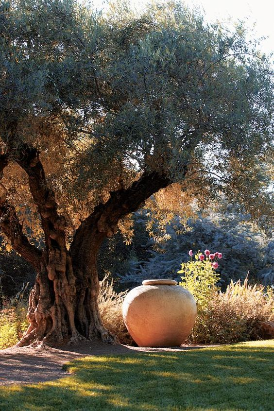 Oversize urns are made from concrete by LUNAFORM, a company based in Maine. The dining table is just to the left of this olive tree