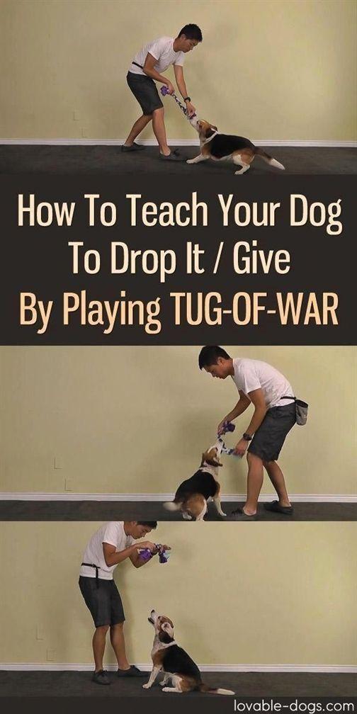 Dog Training Austin Dog Training Obedience Collar Dog Training
