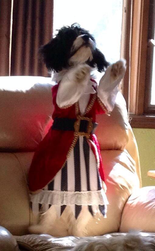 This is another shot of Indy in her Pirate costume.