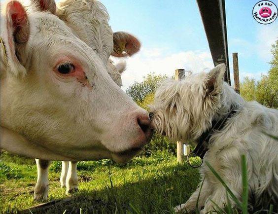 nos amis les bêtes