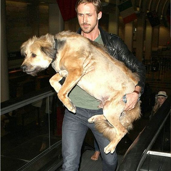 犬を抱っこするライアン・ゴズリング