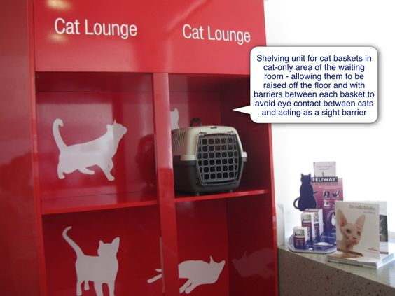 Cat Friendly Clinic Waiting Room Or Reception Area International Cat Care Pet Clinic Waiting Rooms Veterinary Clinic