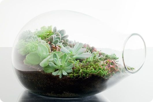 Love terrariums - and I think one wouldn't have to give succulent terrarium a daily misting like one has to with moss terrariums.  Even lower maintenance!